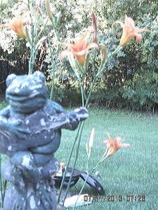Froggie 'before'